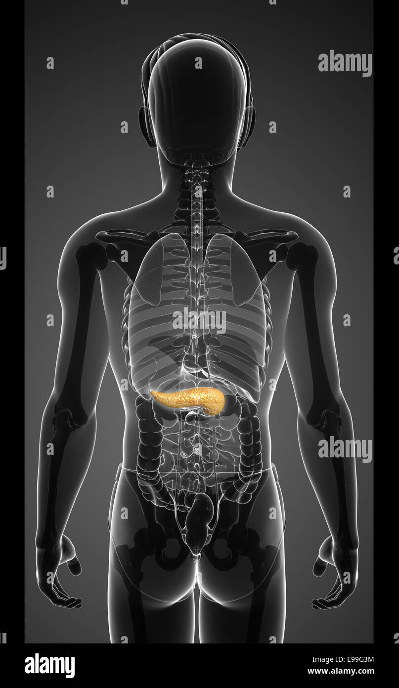 Pancreas Cells Stockfotos & Pancreas Cells Bilder - Alamy