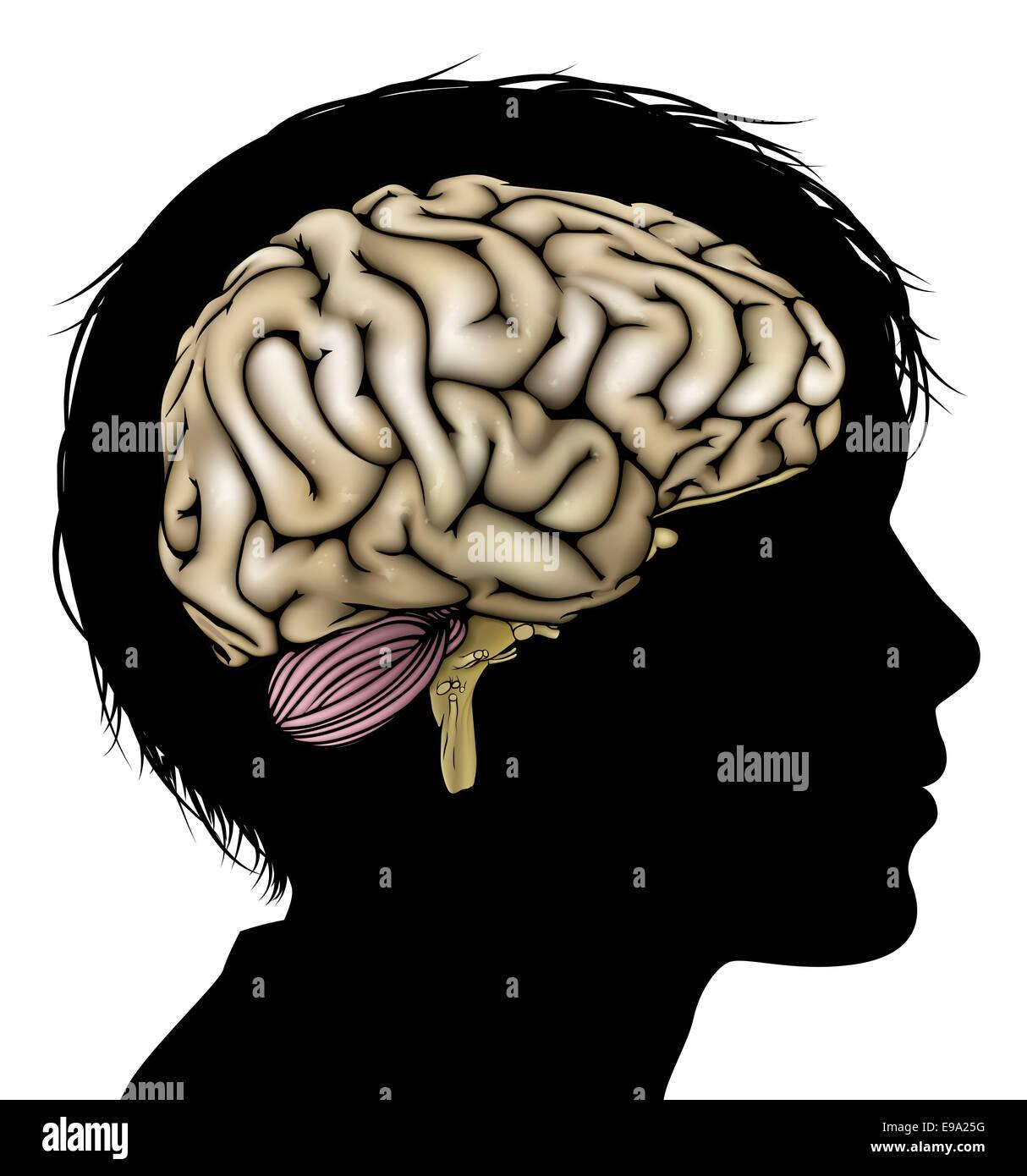 Ein Kinder-Kopf in Silhouette mit Gehirn. Konzept für geistige ...