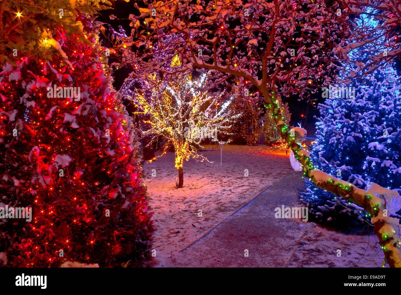 bunte weihnachtsbeleuchtung auf b umen stockfoto bild 74603364 alamy. Black Bedroom Furniture Sets. Home Design Ideas