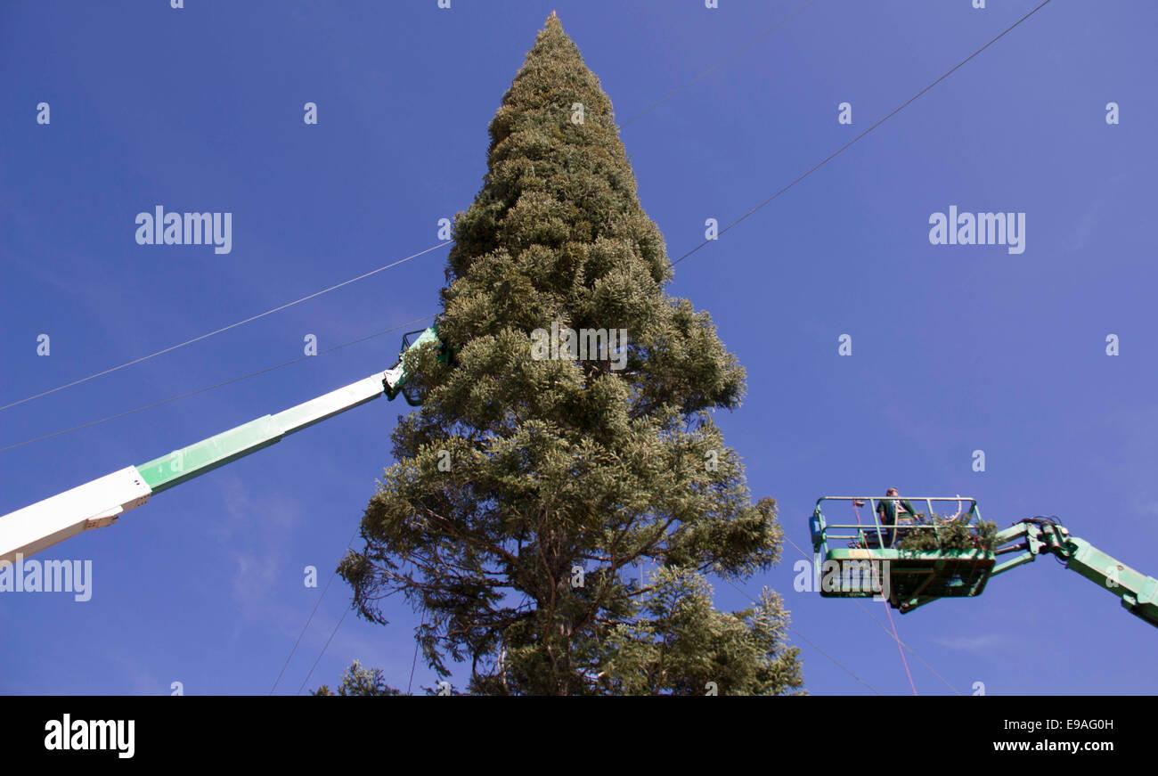 513a69283 Zwei Kräne installieren Zweige auf den Weihnachtsbaum im Citadel Outlets in  Los Angeles