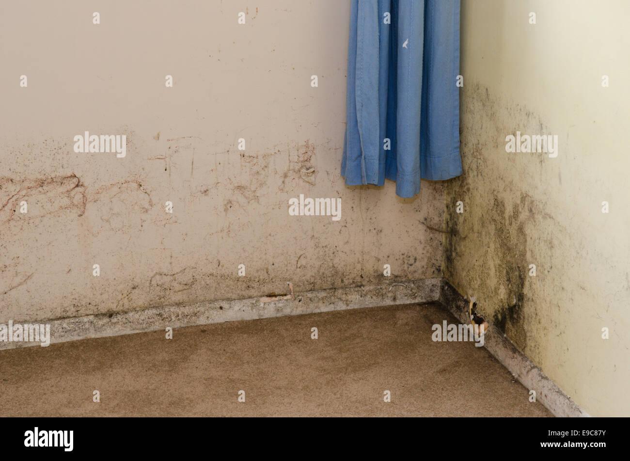 Schimmel wächst auf feuchten Wand im Schlafzimmer des Mietobjektes ...