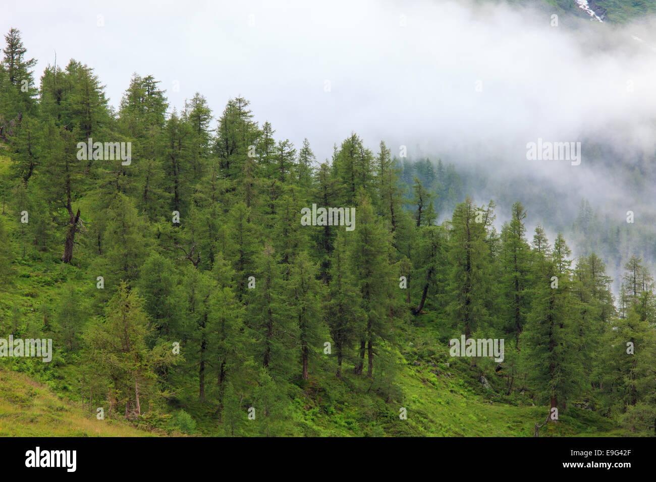 Montane Wald Stockbild