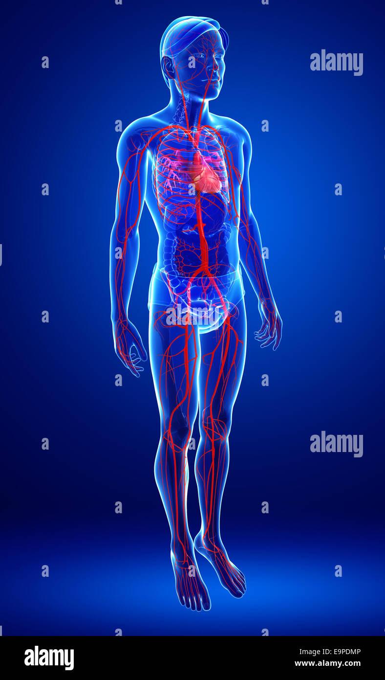 Groß Anatomie Des Atmungssystems Aufgabe 23 Fotos - Anatomie Von ...