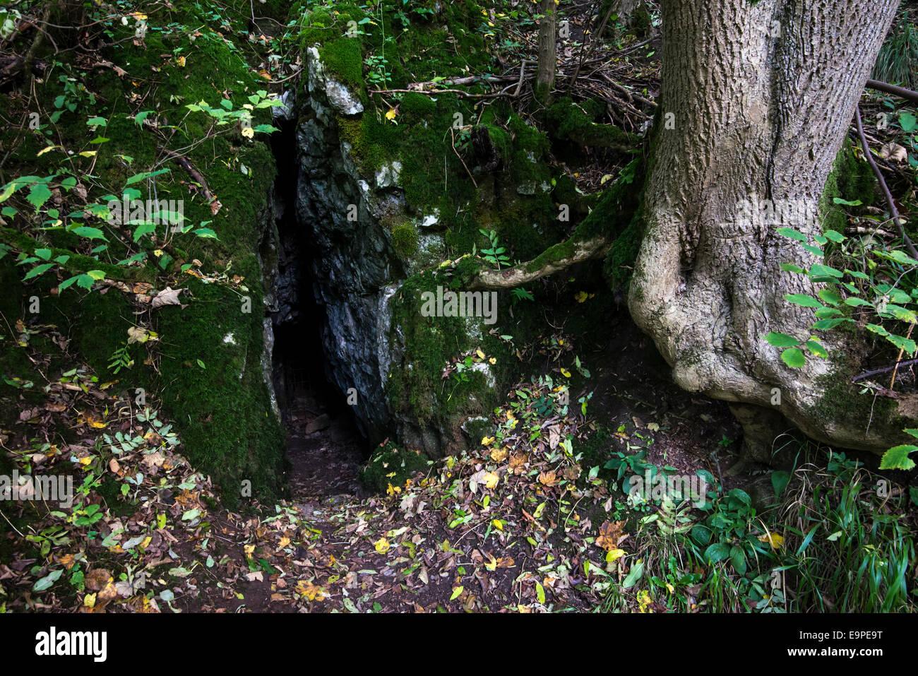 Spalt in den Felsen mit Asche Baum wächst daneben. Herbst Blätter auf dem Boden verstreut. Lathkill Dale Stockbild