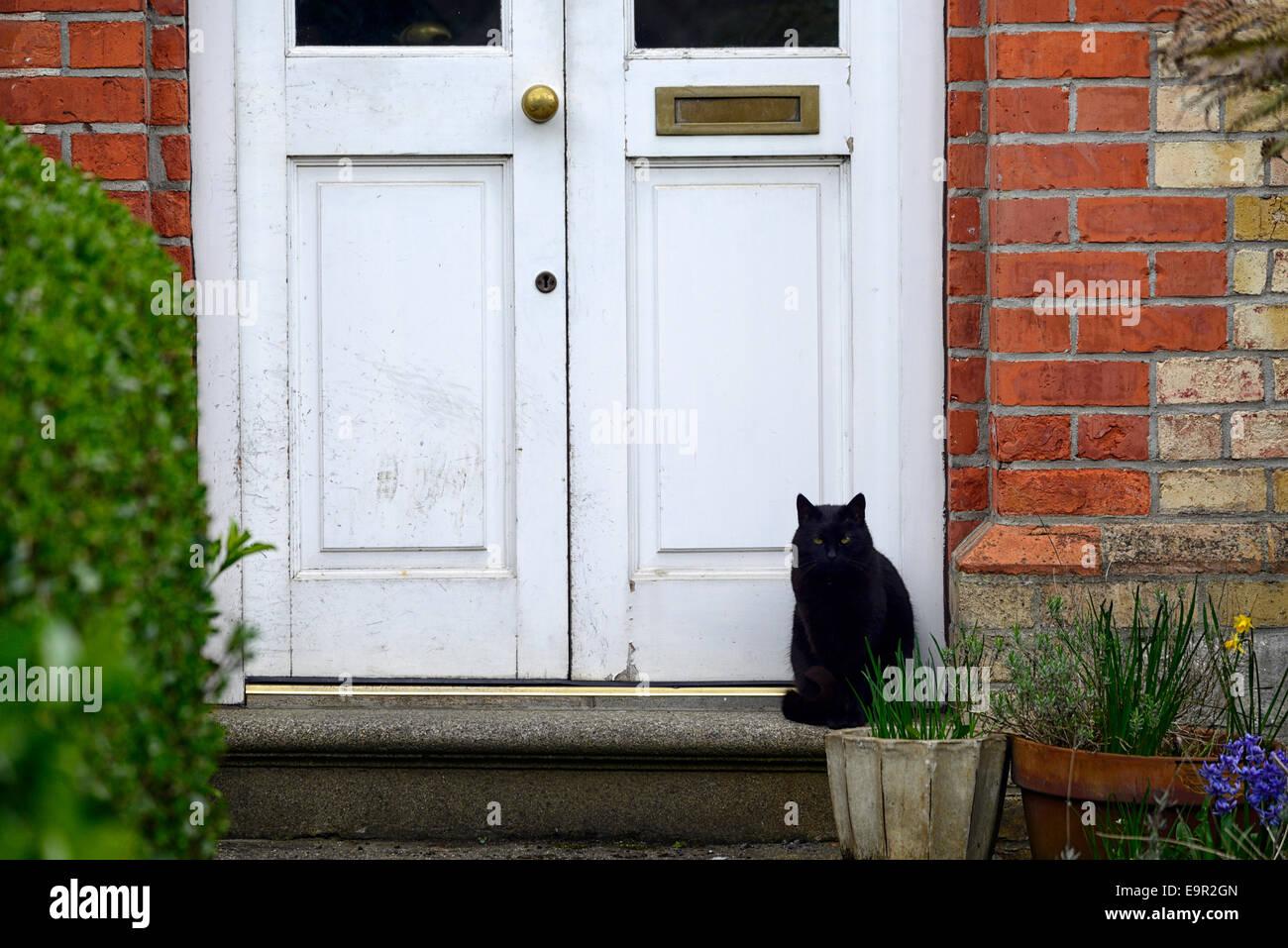 Schwarze Katze sitzen sitzen weiße Haustür Haustür Eingang Glückssymbol Glück warten warten Stockbild