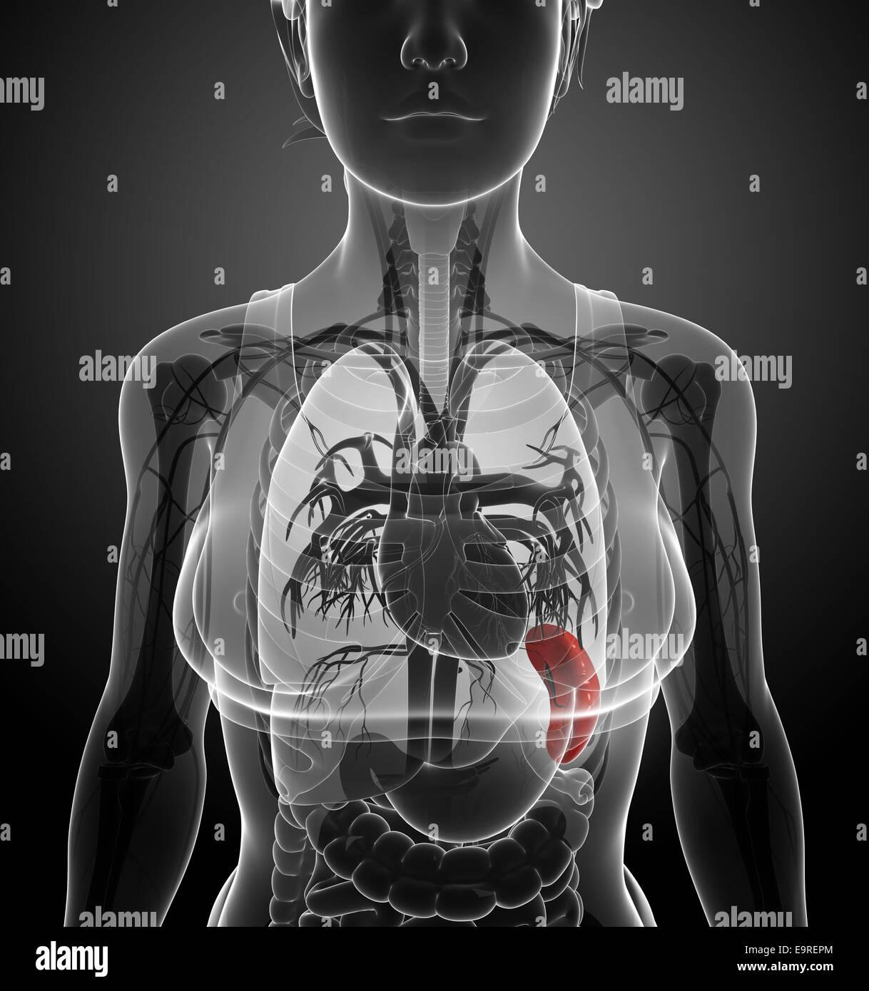 Fantastisch Pearson Bildung Anatomie Und Physiologie Galerie ...