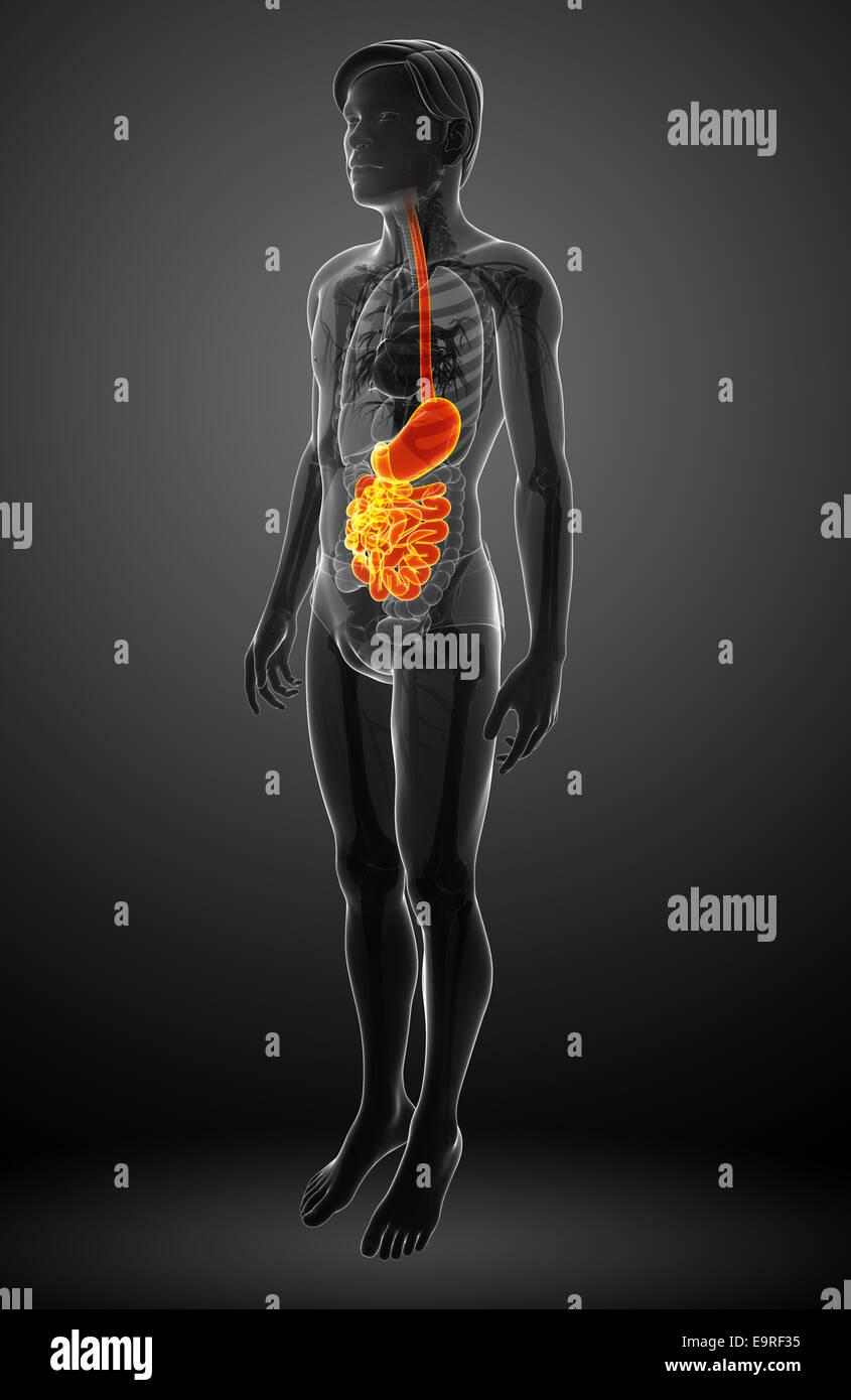 Gemütlich Mcgraw Hill Anatomie Und Physiologie Antwortschlüssel ...