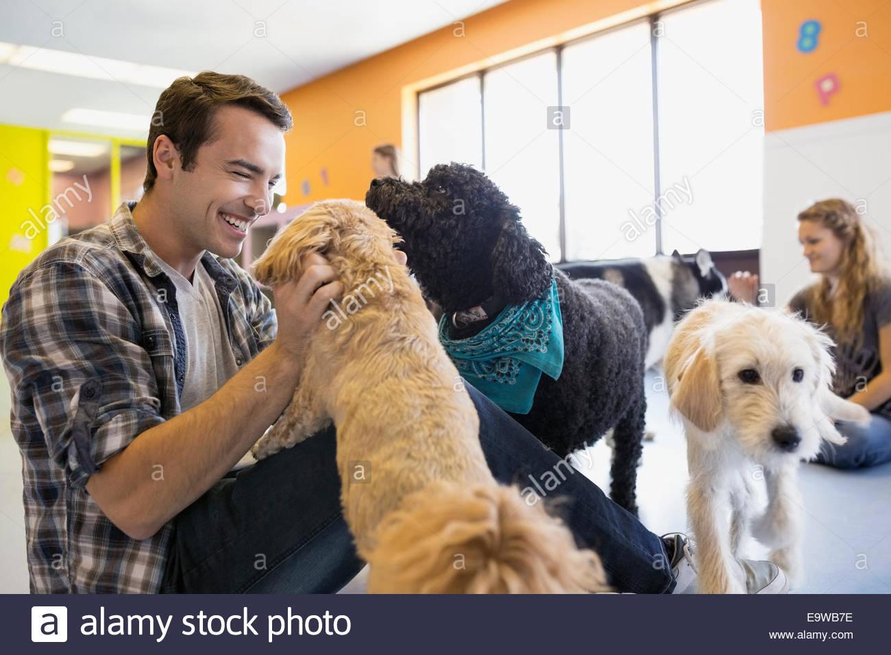 Mann spielt mit Hunden im Hund-Kindergarten Stockbild