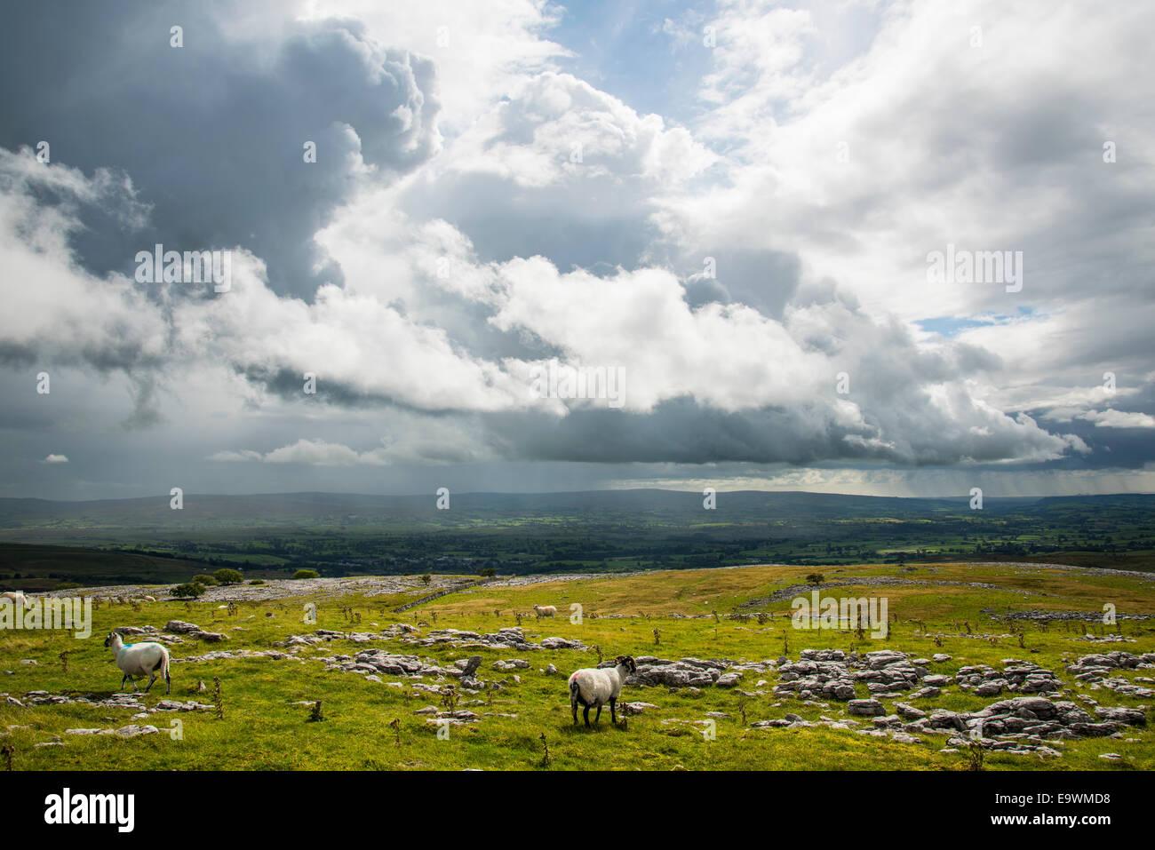 Bedrohliche Wolken und Schafe auf den unteren Hängen des Whernside in den Yorkshire Dales National Park Stockbild