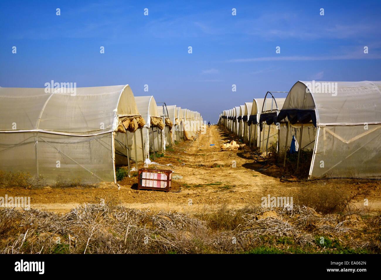 Landwirtschaft im Negev, Israel Stockbild