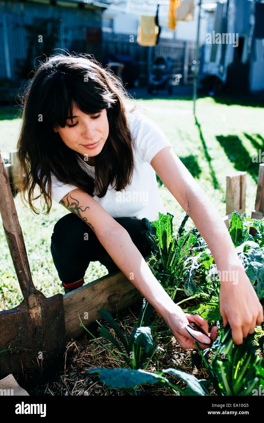 Frau treffen Einheimische Grünkohl im Garten Stockbild