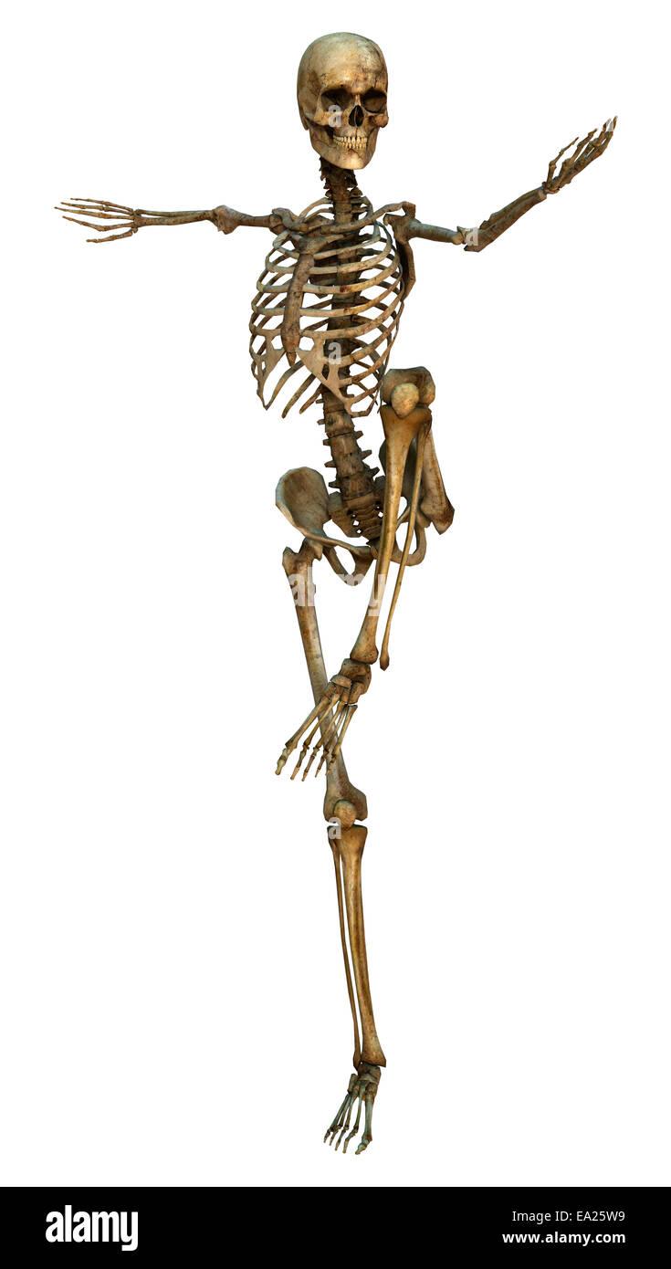Nett Bilder Des Menschlichen Skeletts Fotos - Physiologie Von ...