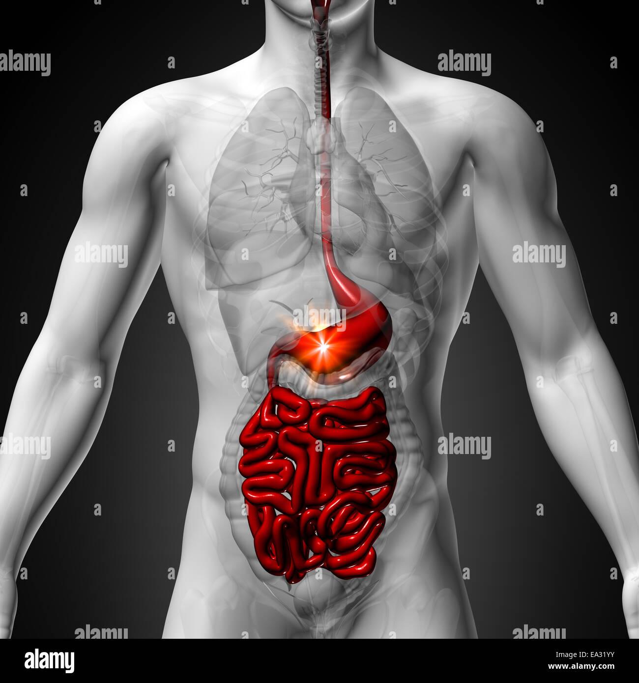 Wunderbar Praxis Anatomie Fragen Galerie - Menschliche Anatomie ...
