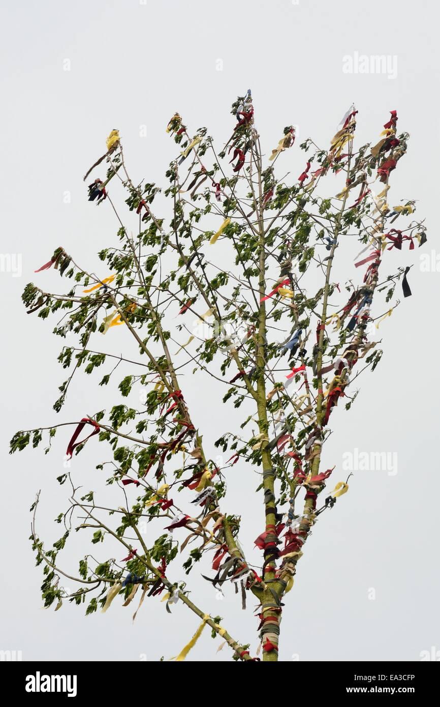Maibaum-Baum und Bänder Stockbild