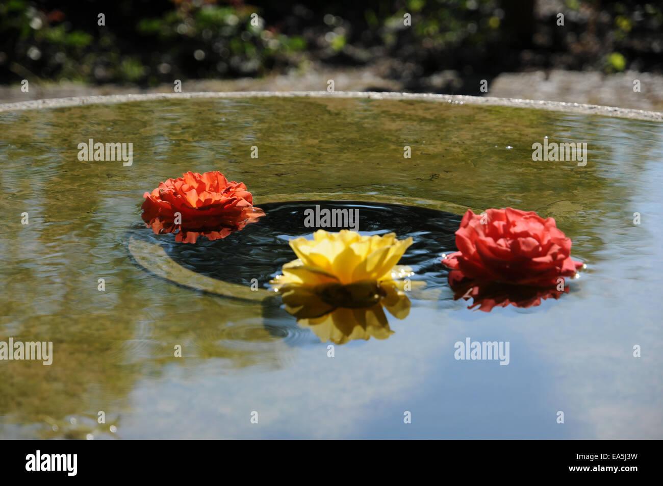 Wasser gut mit Rosen Stockbild