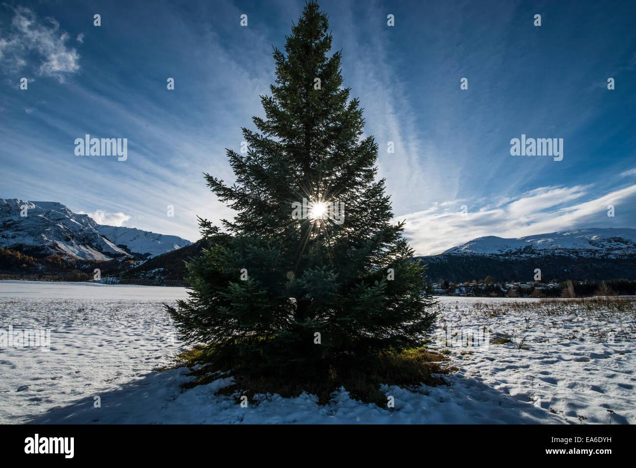 Tannenbaum Mit Schneefall.Tannenbaum Im Schnee Stockfoto Bild 75130709 Alamy