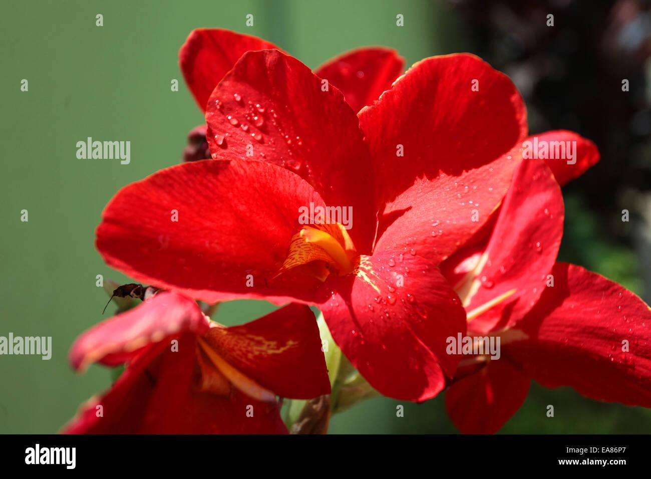 Blume in einem botanischen Garten Stockbild