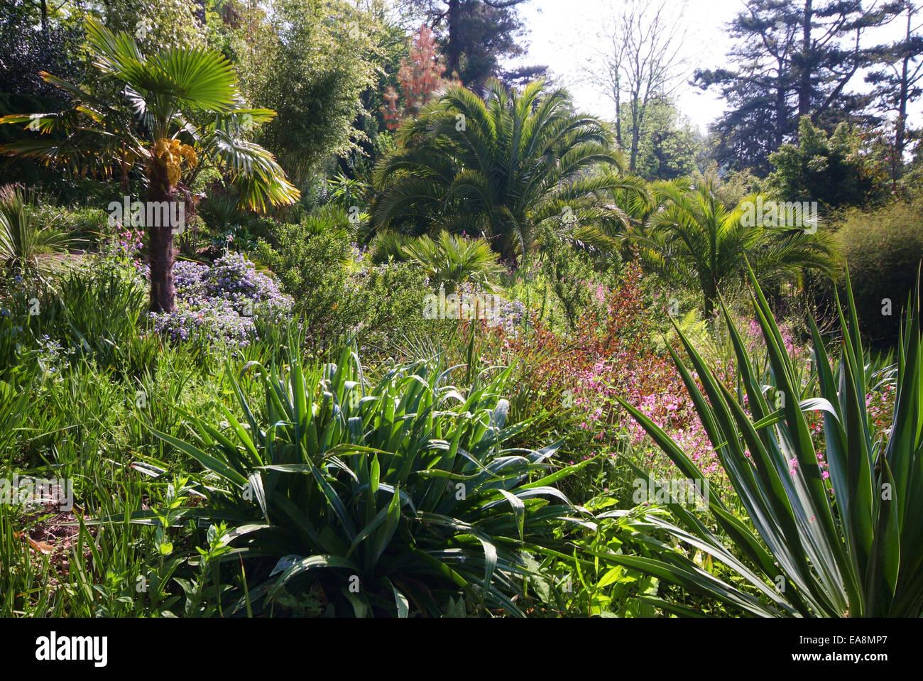 Gärten In Cornwall dschungel garten in die lost gardens of heligan in der nähe