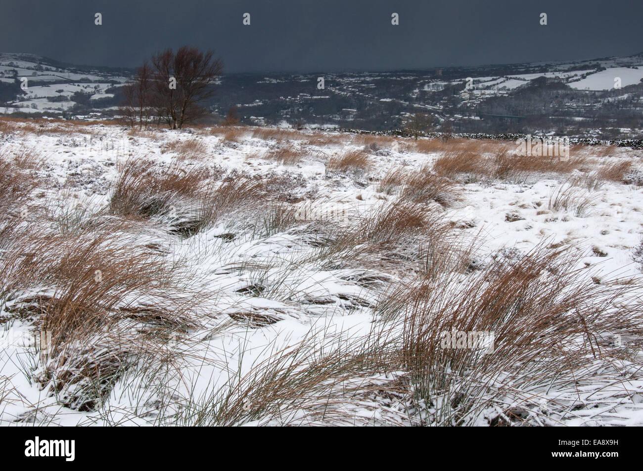 Schnee bedeckt Gräser mit dunklen Wolken über Kopf mit Schnee. Stockbild