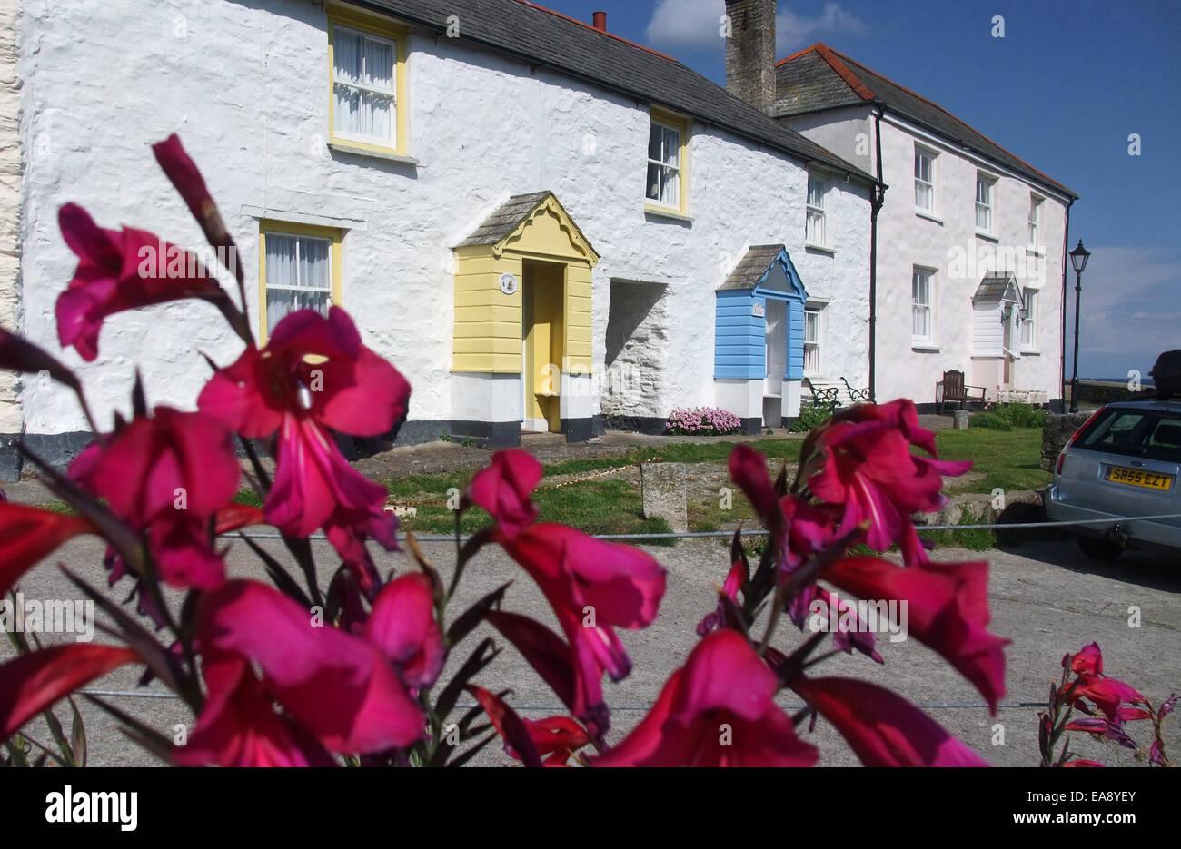 Nahaufnahme von Kaffir Lillies & weißen Cottages mit gelben & blau Veranden im Hintergrund Charlestown Stockbild