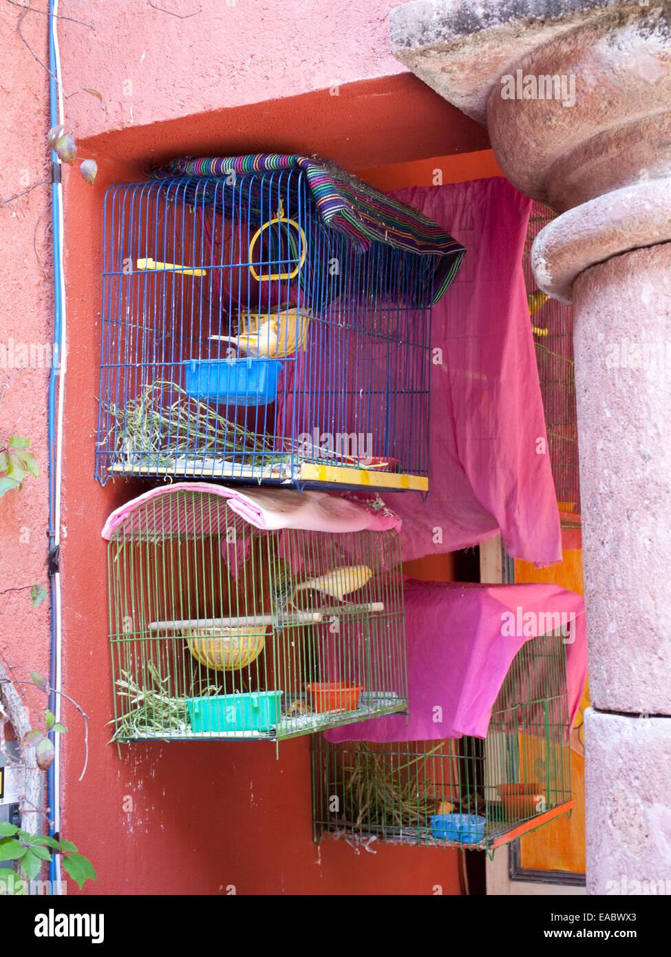 Käfig Kanarienvogel in Garten Stockbild