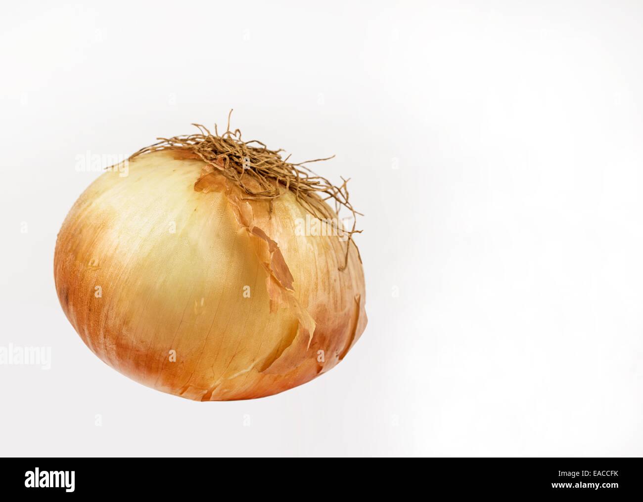 Kochen Zwiebel Allium cepa Stockbild