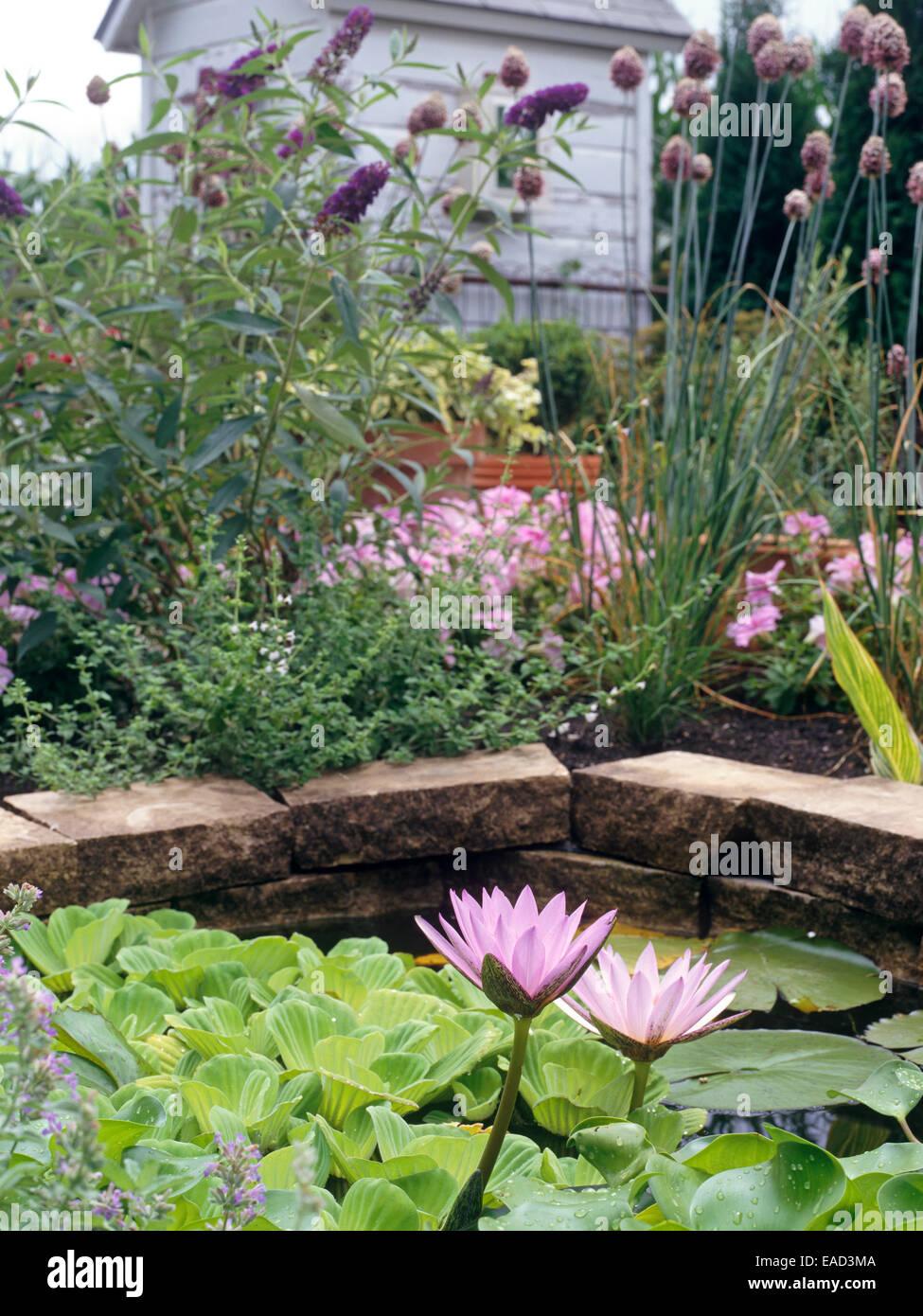 Wasser Lilien im Wassergarten Stockbild