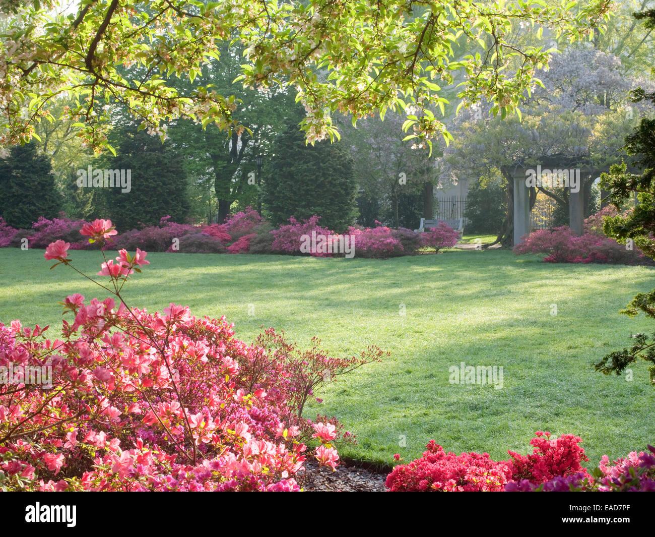 Frühlingsgarten mit blühenden Azaleen Stockbild