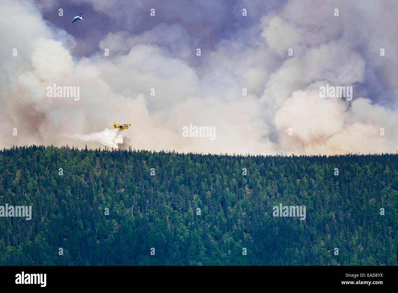 Wald, Flugzeug, Rauch, Feuer, Feuerwehr Stockbild