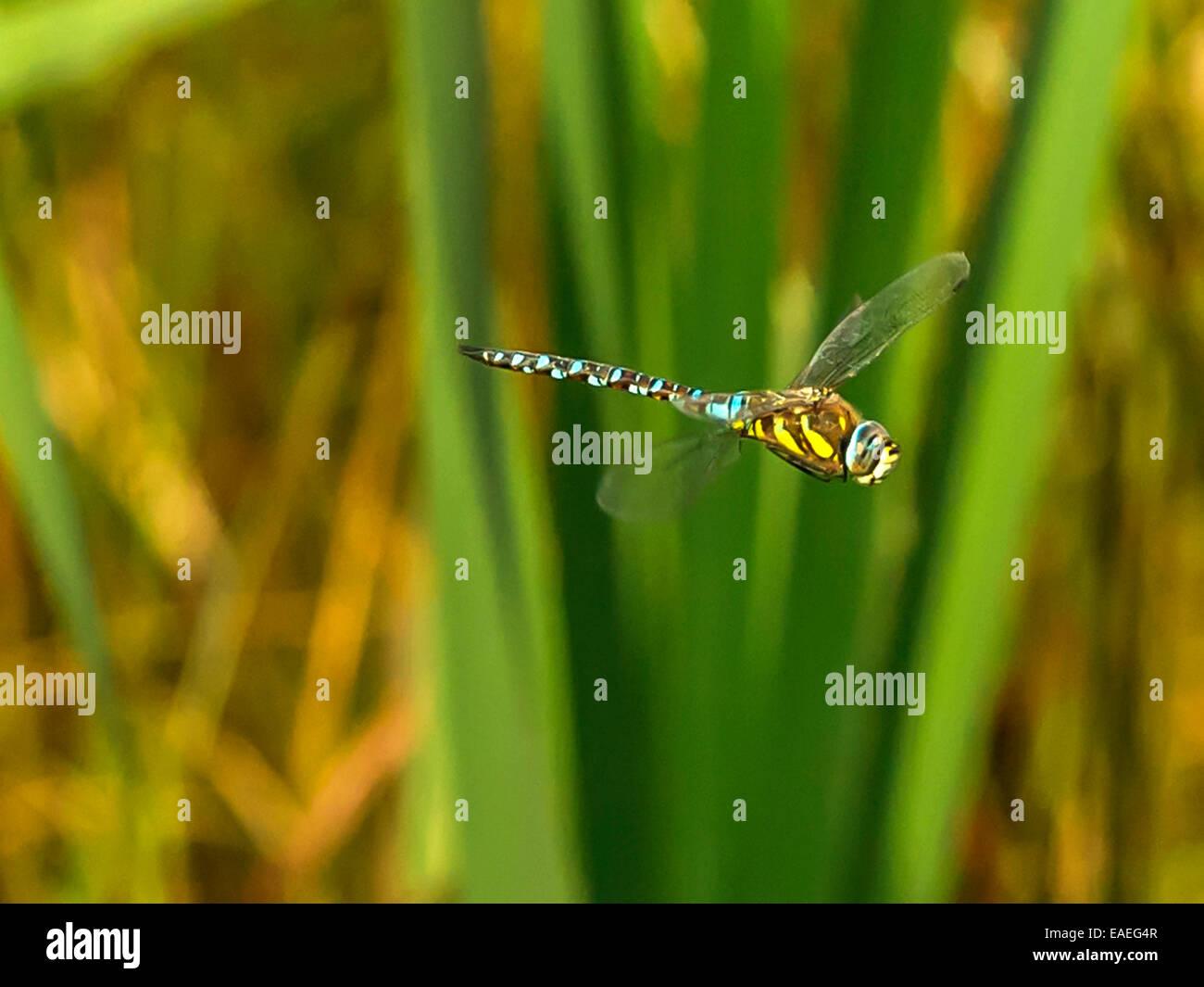 Schön Libelle Malvorlagen Bilder - Malvorlagen Von Tieren - ngadi.info