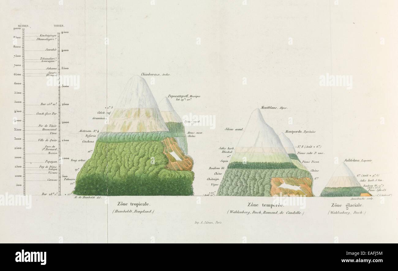 Diagramm der Pflanzengeographie, vergleicht man die Verteilung der Pflanzen in verschiedenen Höhen in verschiedenen Stockbild