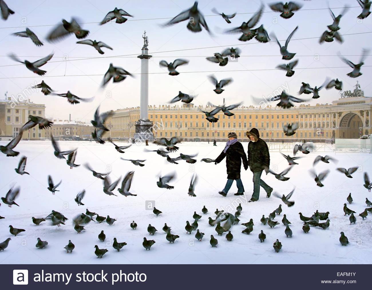 Vögel auf dem Schlossplatz, Alexander-Säule. Sankt-Petersburg, Russland. Stockbild