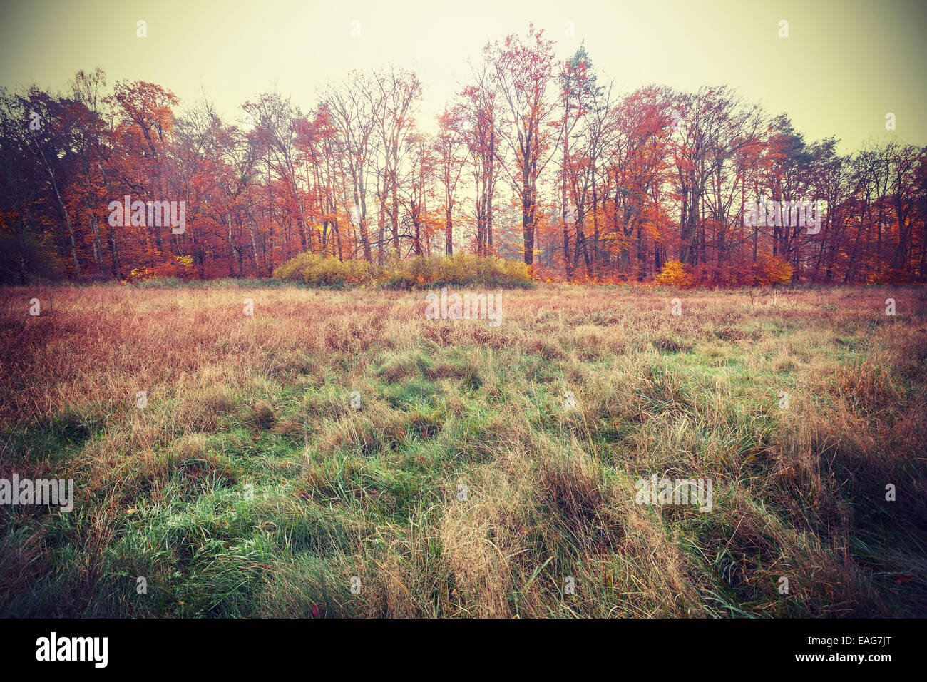 Vintage gefilterte Foto eines Herbst-Felds. Stockbild