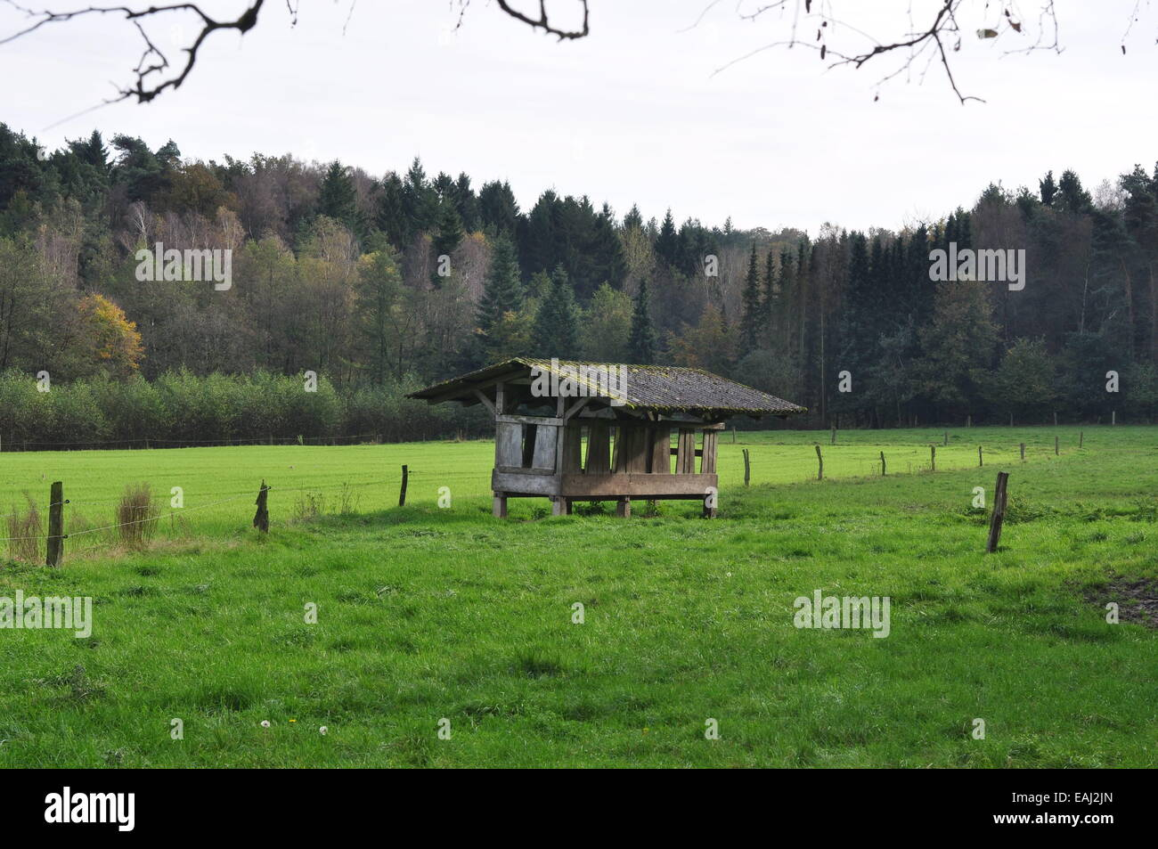 Holzkuh Schuppen in der Mitte eines grünen Rasen Wiese Grasland Natur reservieren Maiburg Bippen Niedersachsen Stockbild
