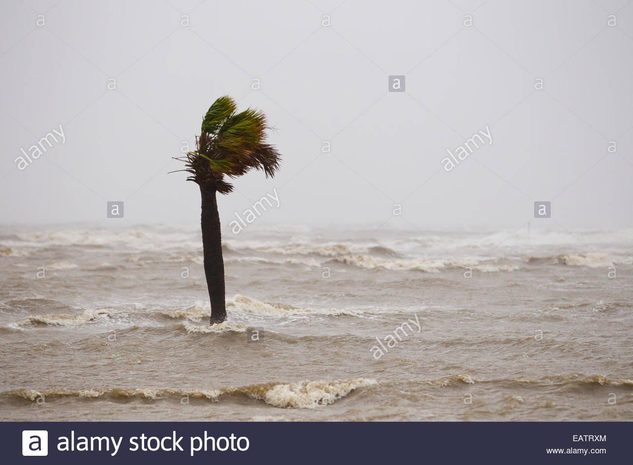 Eine Palme in Hurricane Isaac Sturmflut entlang Highway 90. Stockbild