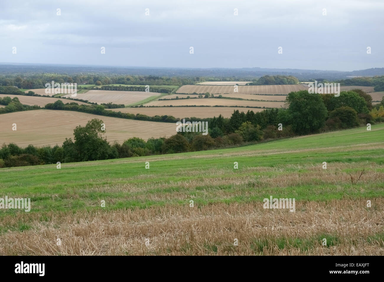 Weizen Stoppeln mit einigen Pflanzen und Unkraut regrowth im frühen Herbst, Berkshire, September Stockbild