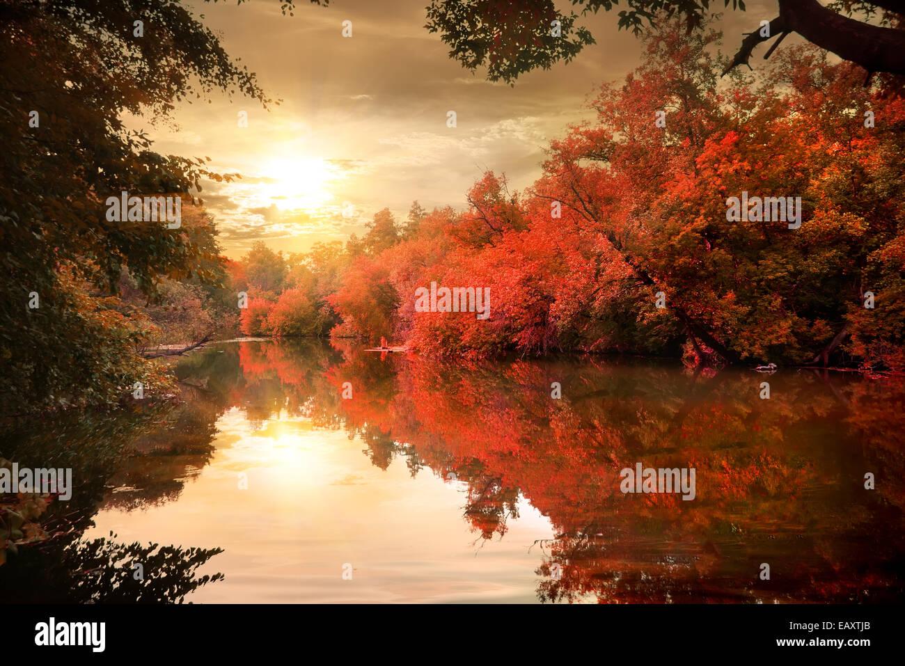 Lebendigen Farben von den herbstlichen Wald bei Sonnenuntergang Stockfoto