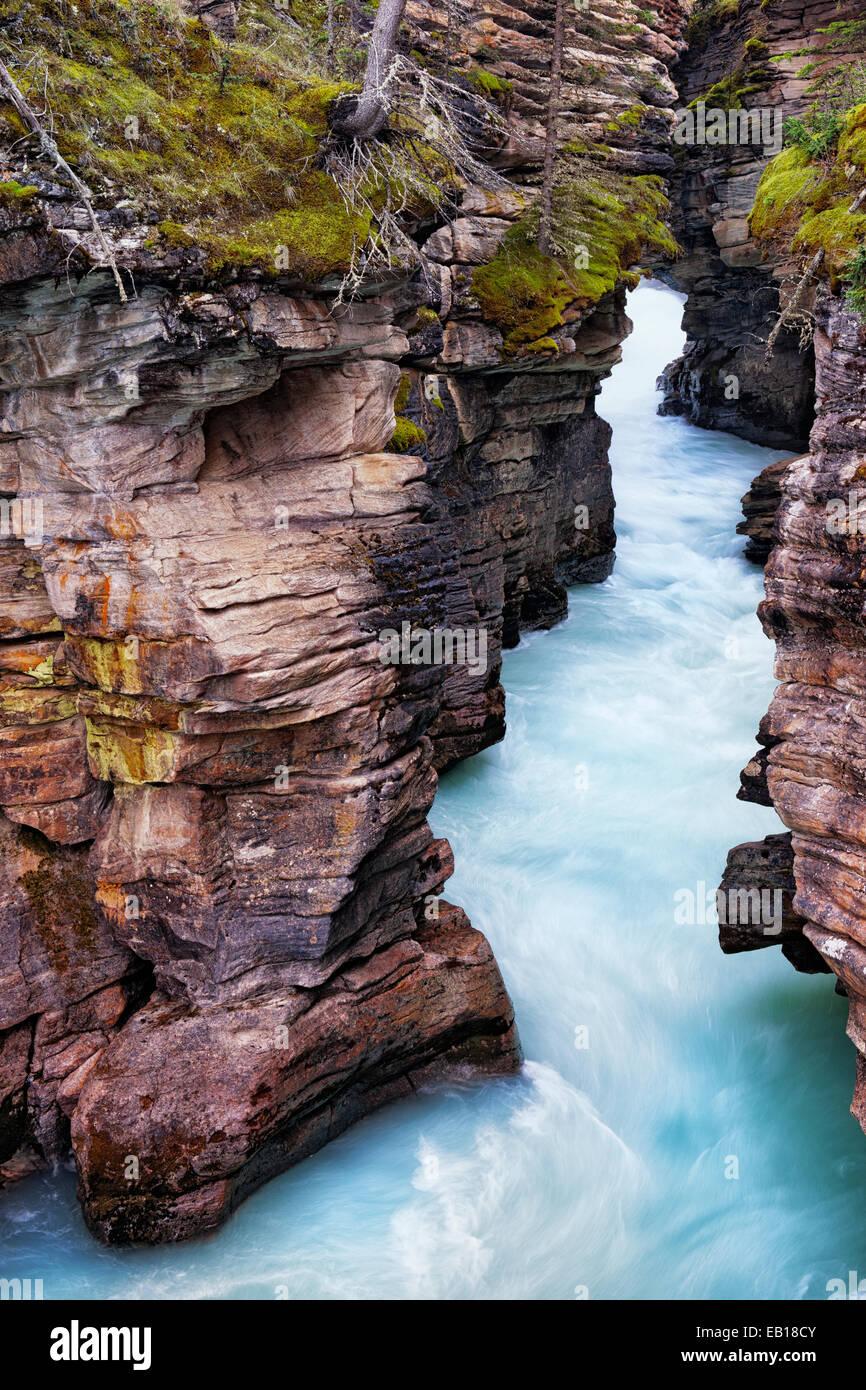 Das Upper Athabasca River rauscht durch die geschnitzten aus Kalkstein Schlucht in Alberta die kanadischen Rockies Stockbild