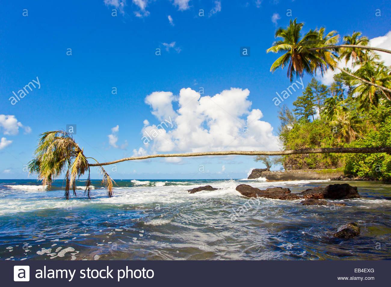 Eine Palme wachsen horizontal heraus über die Brandung am Pacific Beach. Stockbild