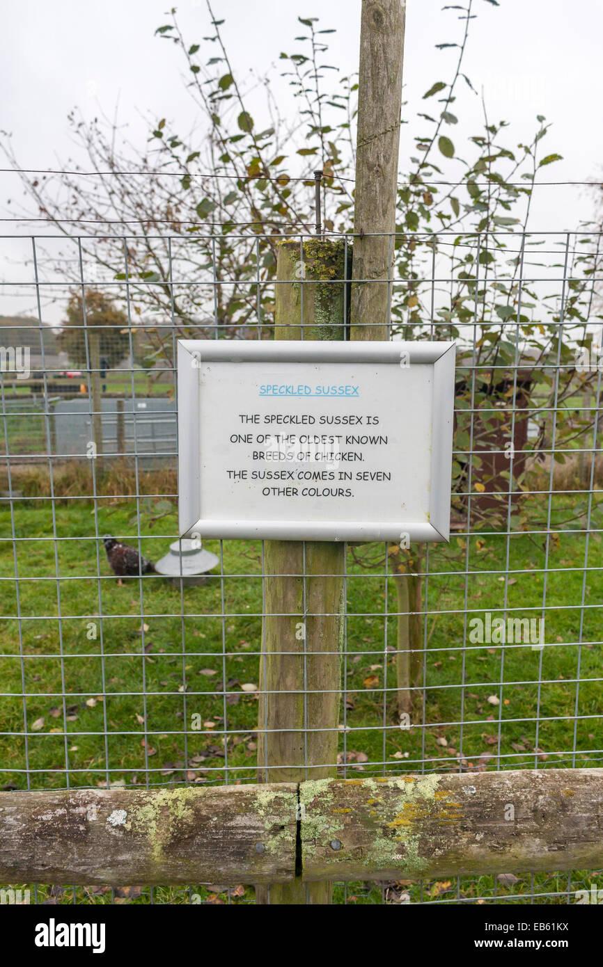 Gesprenkelte Sussex Huhn Gehäuse am Kinderbauernhof Quoten Farm, Wooburn Common, Buckinghamshire, Großbritannien Stockbild