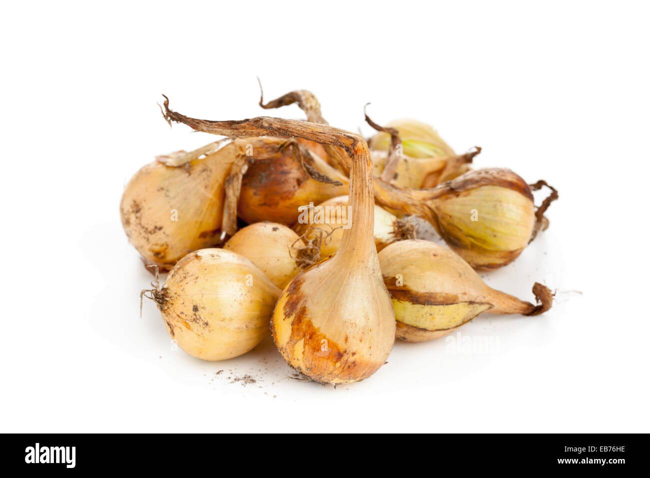Frisch geerntete Beizen Zwiebeln auf weißem Hintergrund Stockbild