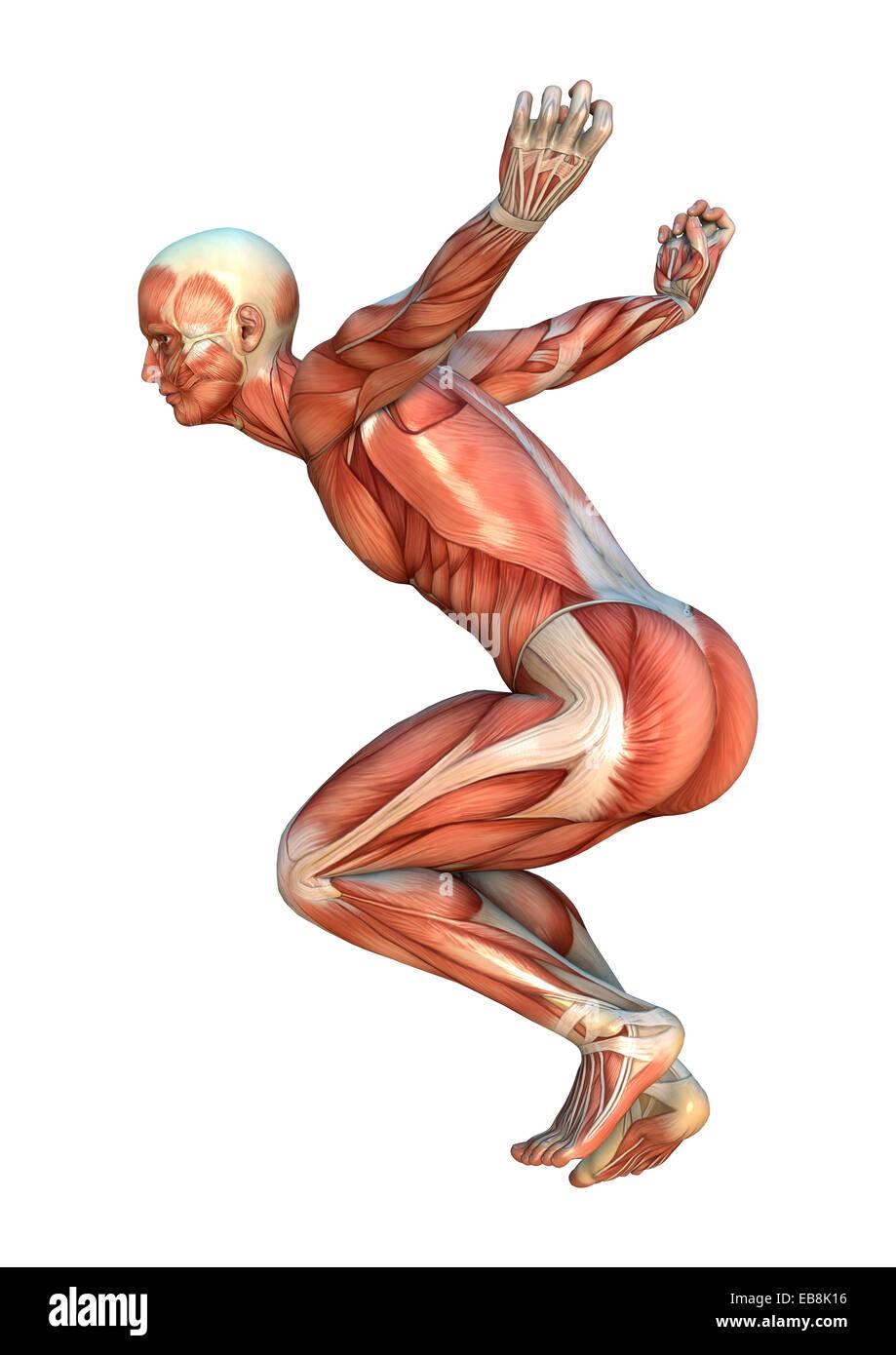 Fein Menschlicher Körper Muskel Karte Fotos - Menschliche Anatomie ...