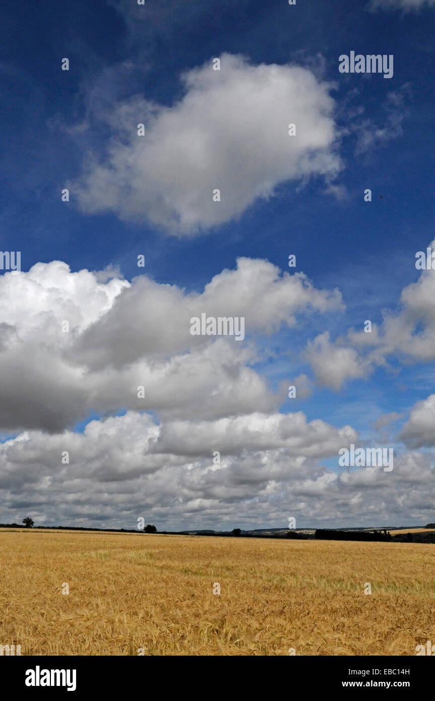 Cotswold englischen Landhaus Kornfeld im Hochsommer mit großen Himmel Stockbild