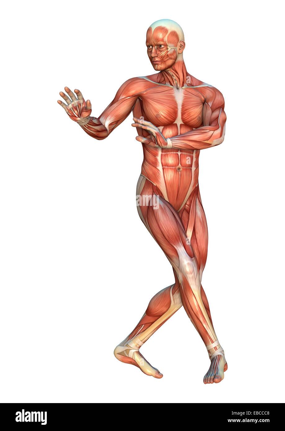 Digitale 3D Rendern einer menschlichen Figur mit Muskel-Karten in ...