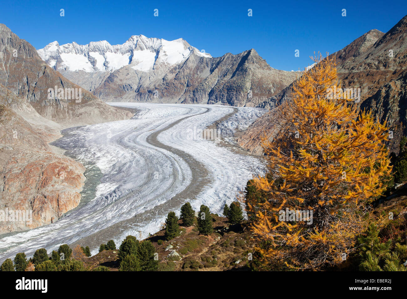 Aletsch Gletscher, Schweiz Stockbild