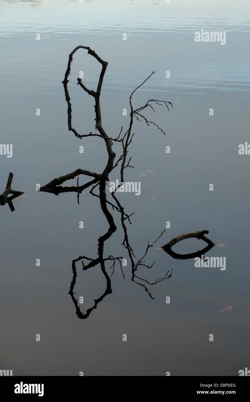 Gefallenen Ast im Wasser reflektiert Stockbild
