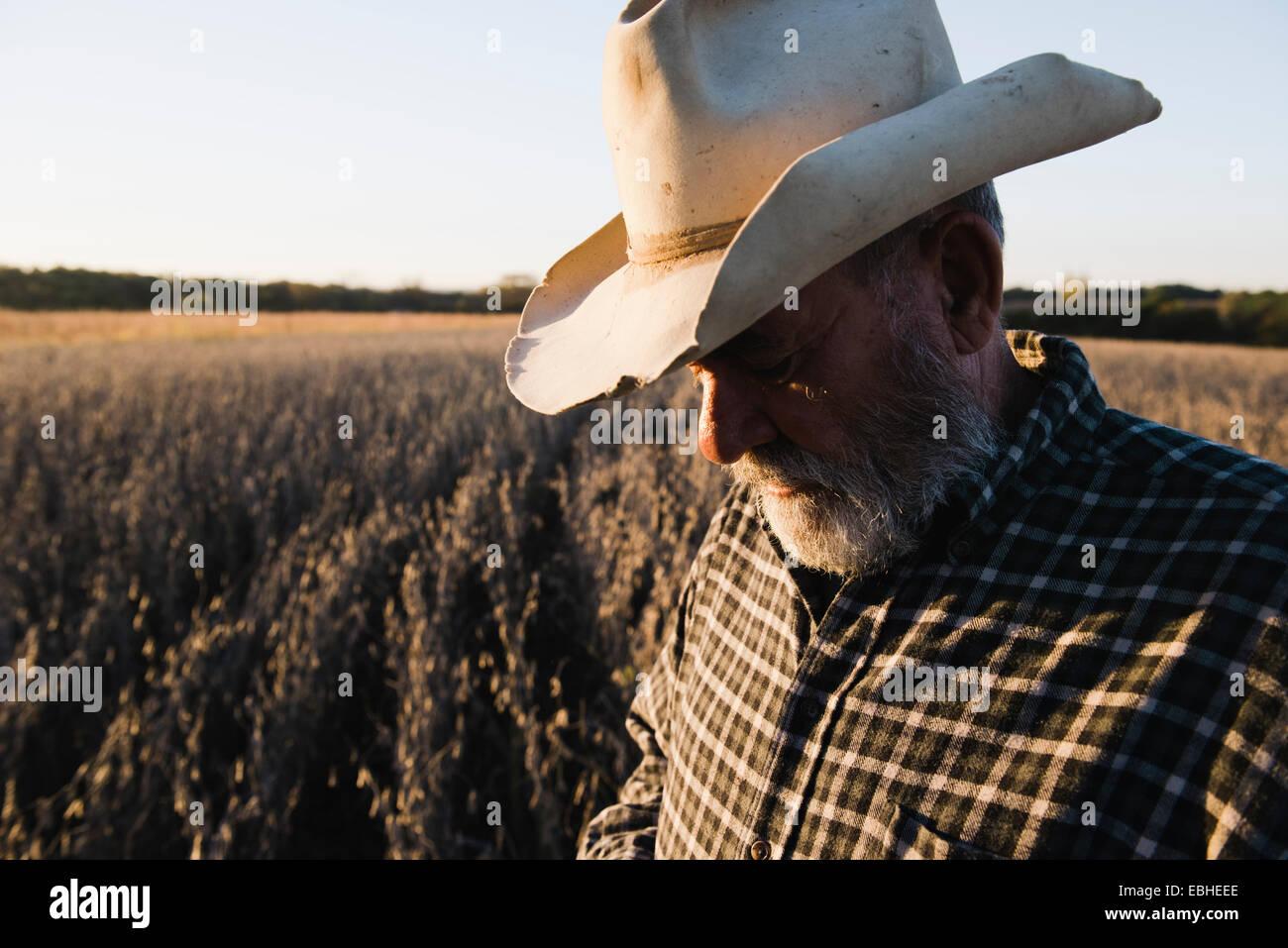 Ältere männliche Bauer blickte auf Soja-Ernte, Plattsburg, Missouri, USA Stockbild