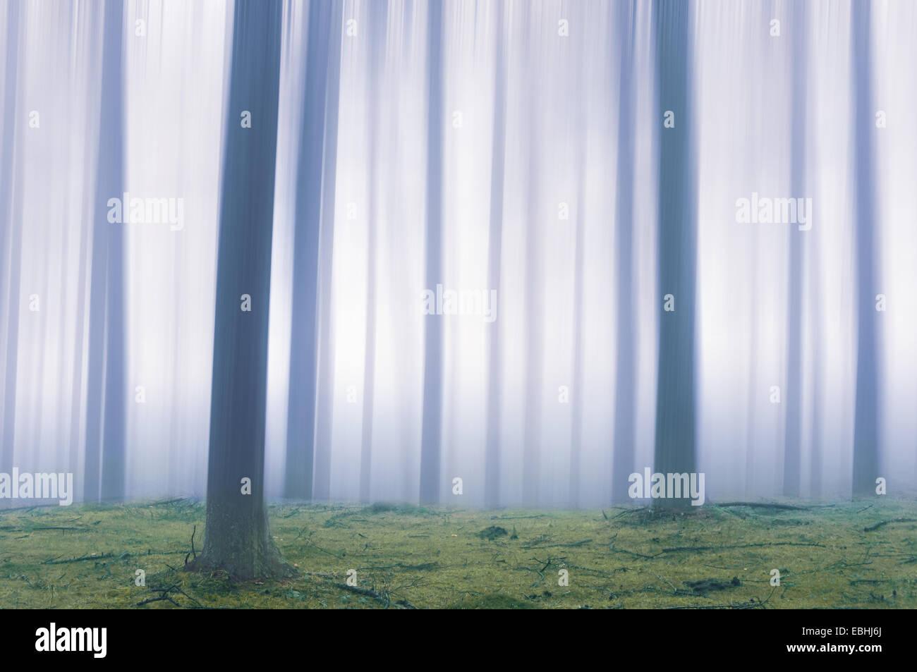 ätherisch Wald mit Bewegungseffekt verschwommen Stockbild