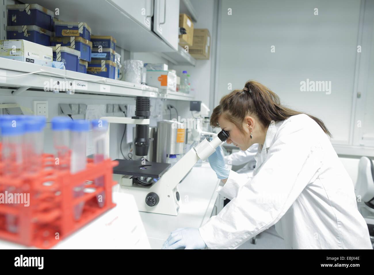 Biologie laboranten prüflinge durch mikroskop betrachten stockfoto