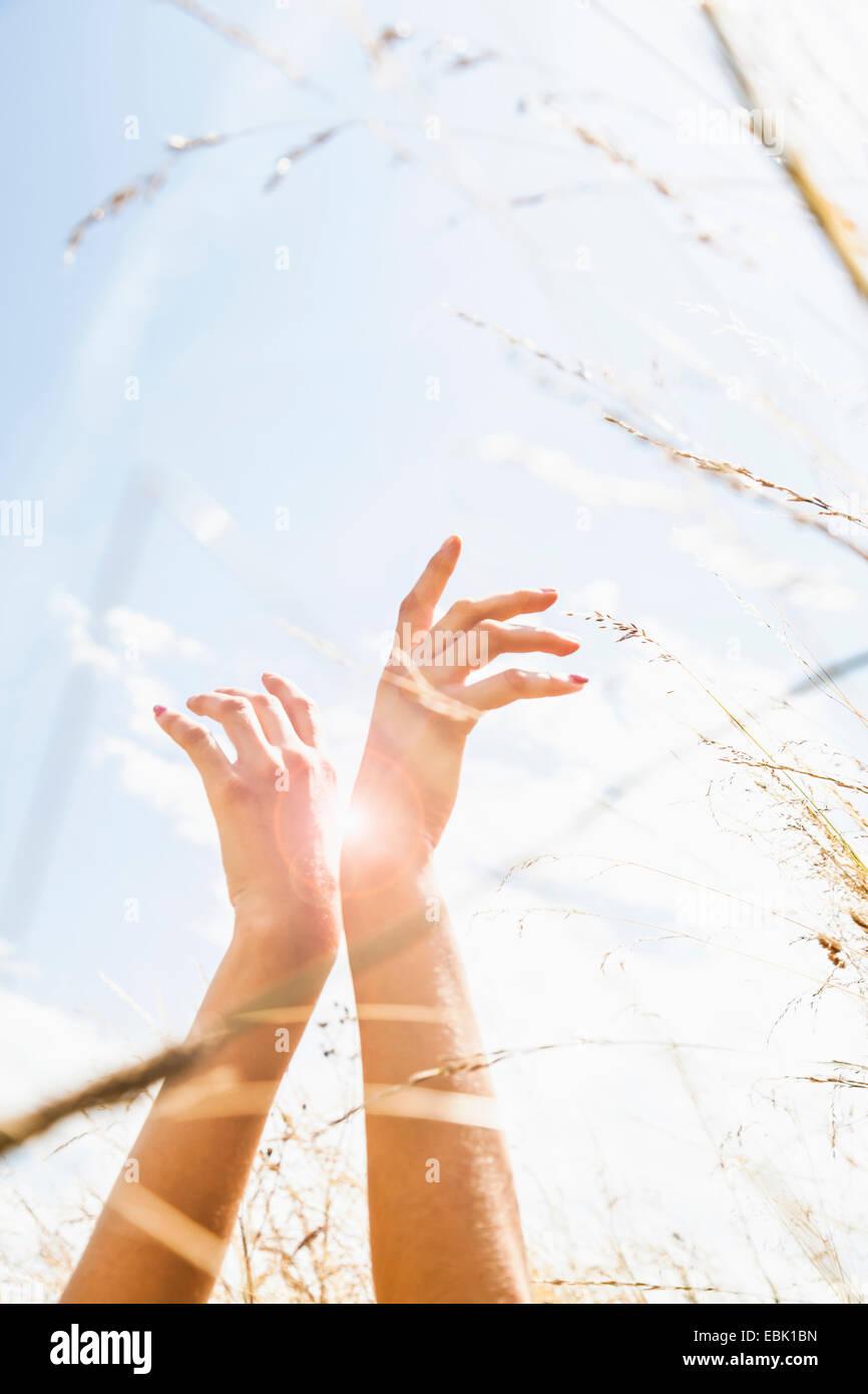 Junge Womans Hände unter langen Rasen Stockbild